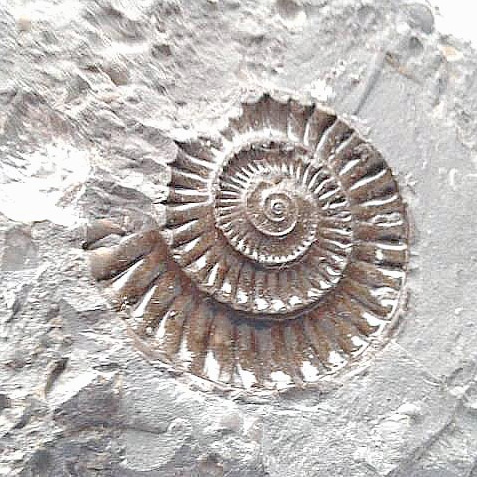 fossil-stone